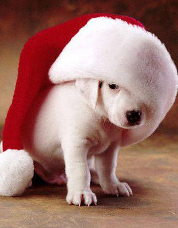 christmas_dog