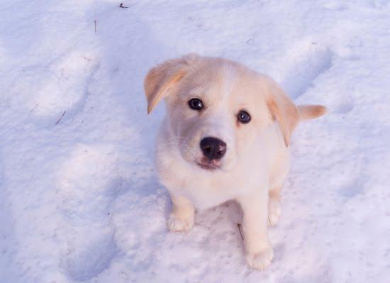 winter-weather-dog